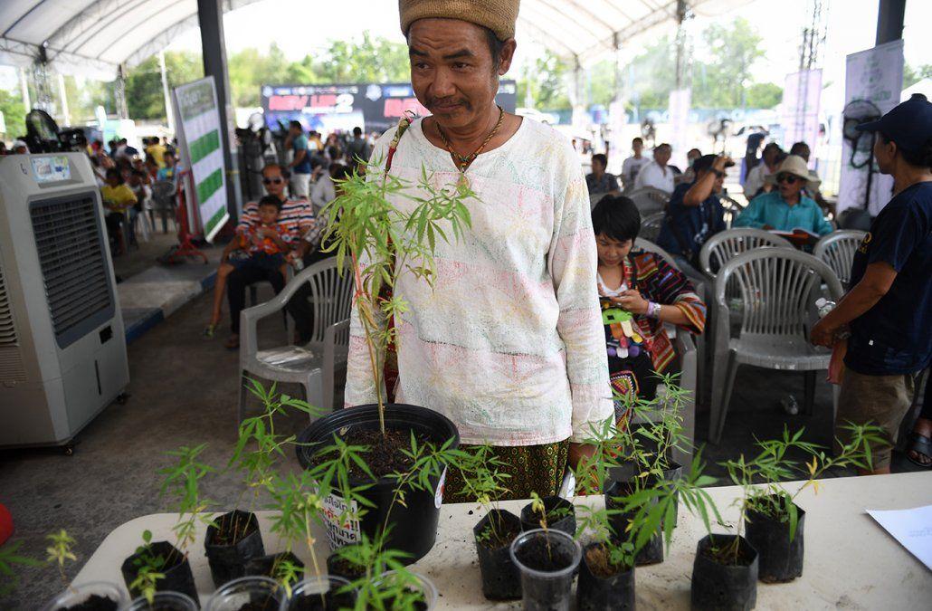 Primer festival de marihuana en Tailandia tras legalización para uso médico