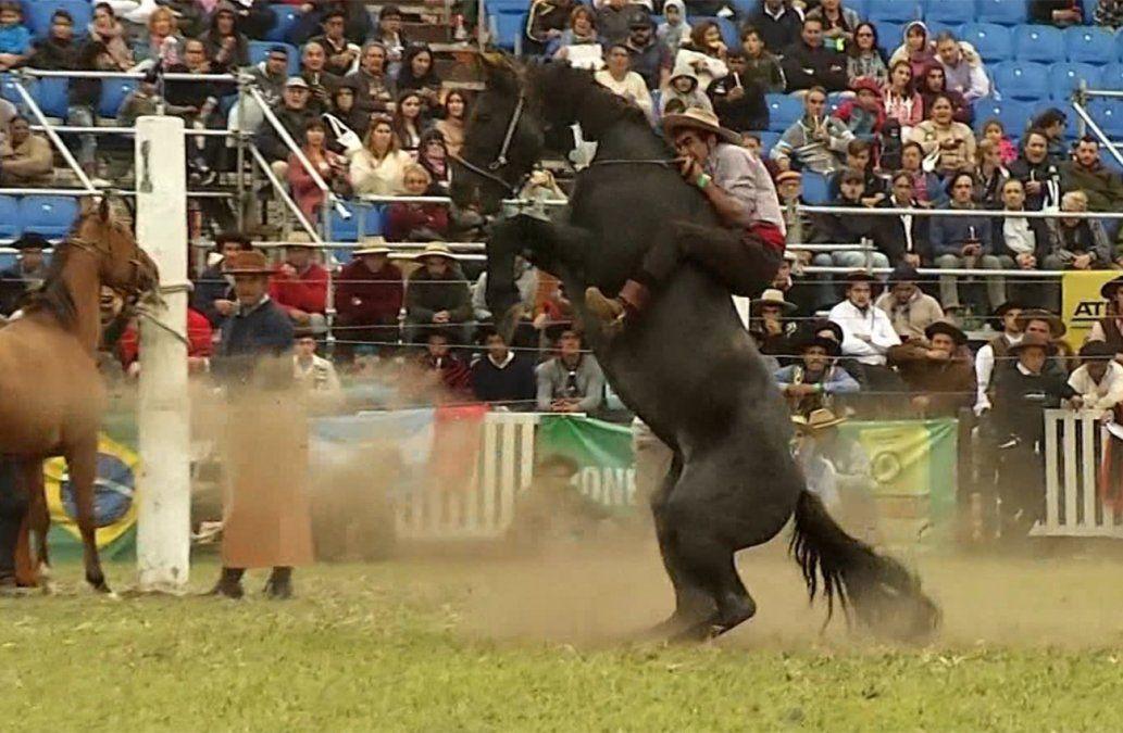 Intendencia de Montevideo analiza reformular la Semana Criolla por muerte de dos caballos