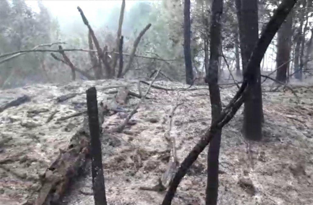 Incendio que se presume intencional afectó 25 hectáreas de bosque en La Paloma