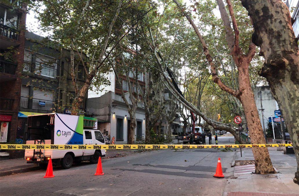 Caída de árbol en Pocitos provoca desvíos en el tránsito