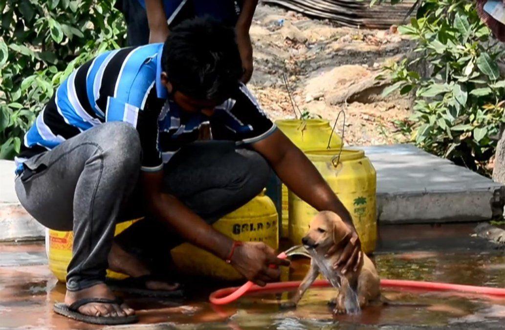 Ola de calor extrema en India con temperaturas que superan los 50°C