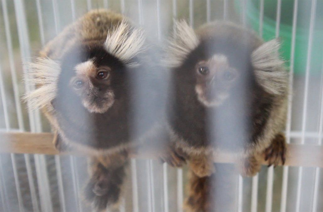 Dos detenidos por tráfico de animales exóticos y 600 ejemplares recuperados
