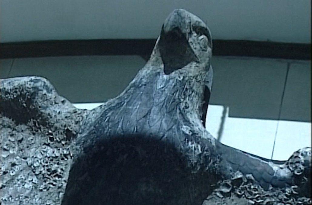 La Justicia obligó al Ministerio de Defensa a vender el águila nazi del Graf Spee