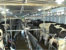 Ofrecen préstamos a lecheros en problemas, que insisten con demandar a Venezuela