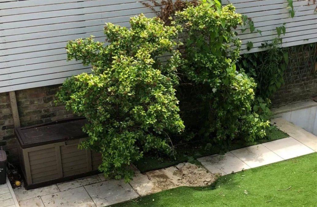 Hombre embarcado en avión de forma clandestina cayó en el  jardín de una casa
