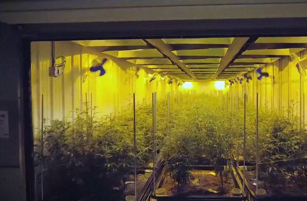 Más de 1,000 postulantes para trabajar en la planta de cannabis medicinal de Juan Lacaze