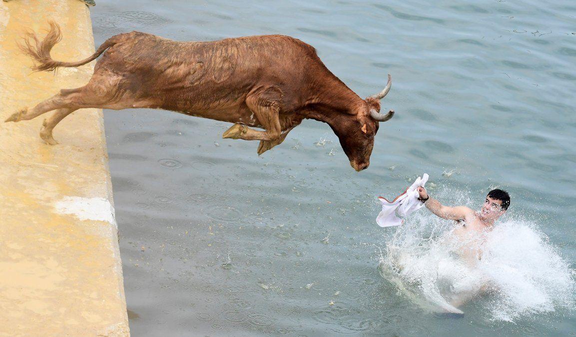 Un toro salta al agua durante la tradicional corrida de todos en el puerto de Denia