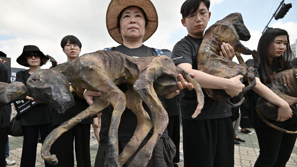 Activistas surcoreanos por los derechos de los animales sostienen restos semejantes a los de perros muertos durante una protesta contra el comercio de carne de perro
