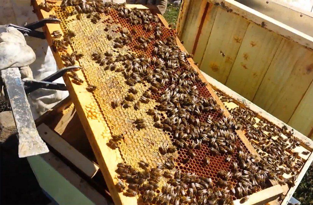Apicultores denuncian que hay toneladas de miel sin vender