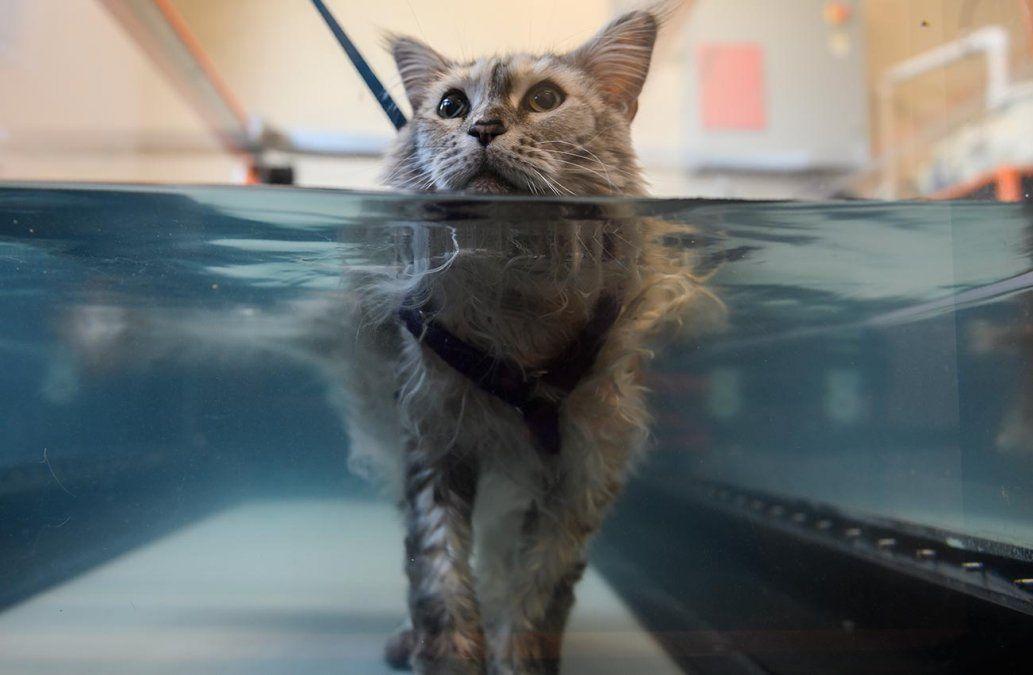 Humanización de las mascotas: hidroterapia y acupuntura para perros y gatos