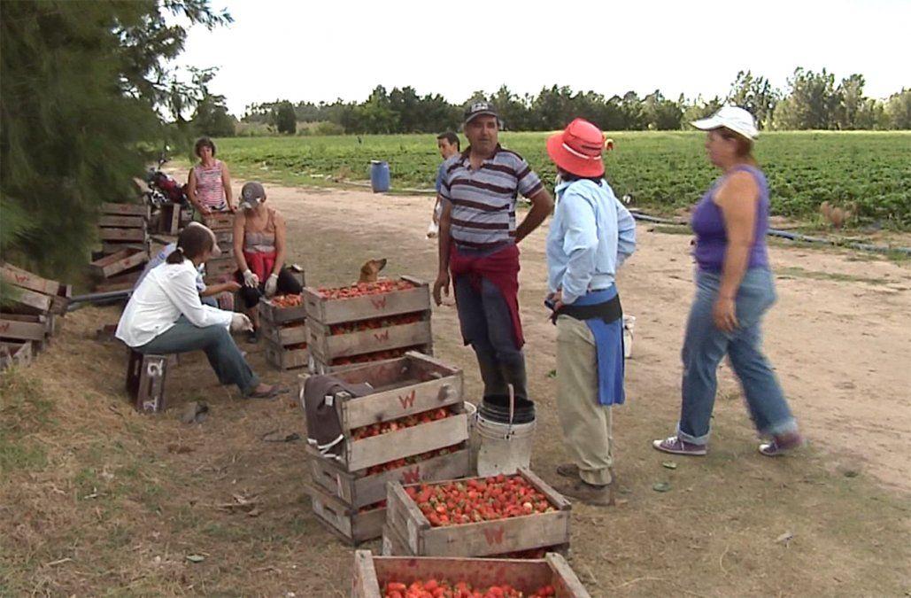 Aumenta 7% en promedio el salario de los trabajadores del sector rural