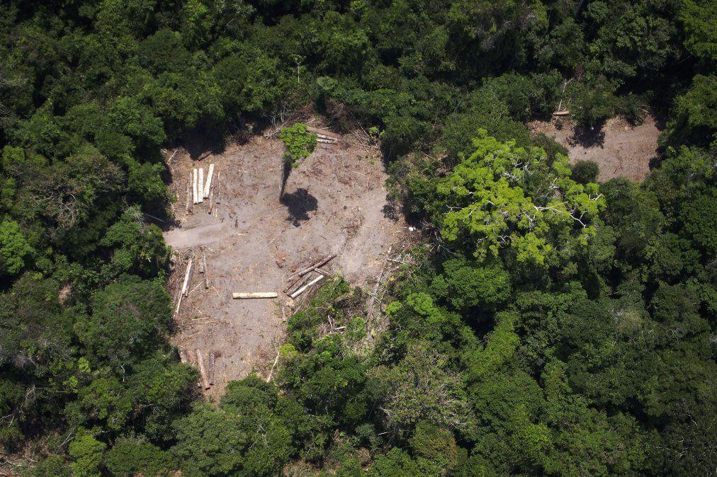 Alemania recorta fondos ante deforestación de la Amazonia en Brasil