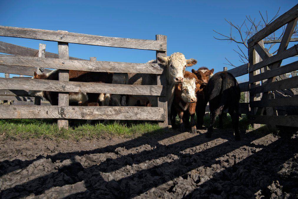 La lucha de los veganos en Uruguay, el país con más vacas per cápita del mundo