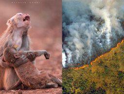 Éstas son las fotos engañosas sobre los incendios que arrasan la Amazonia