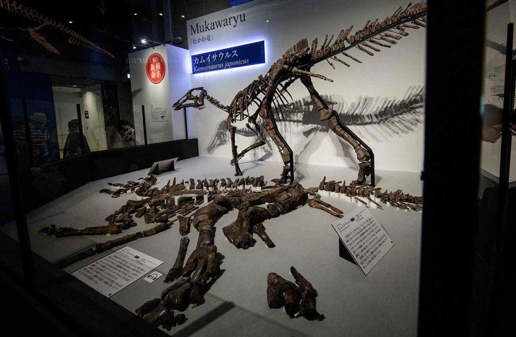 Hallan en Japón una nueva especie de dinosaurio del tipo pico de pato