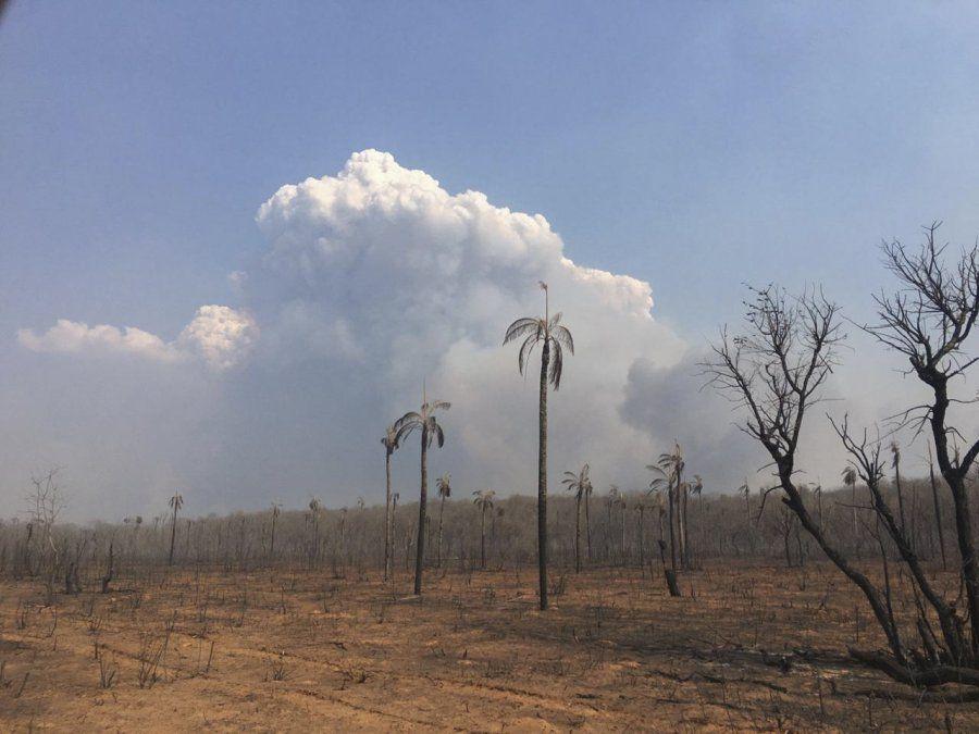 Incendios forestales en Bolivia consumieron 5,3 millones de hectáreas