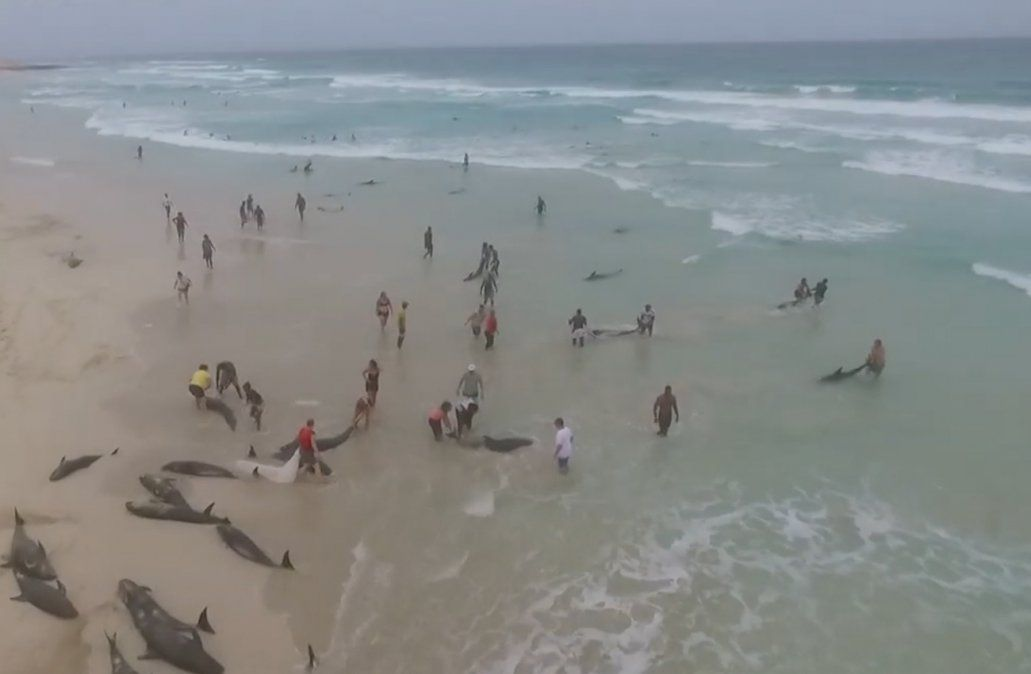 Desesperado intento por salvar cientos de delfines varados en playas del Mediterráneo