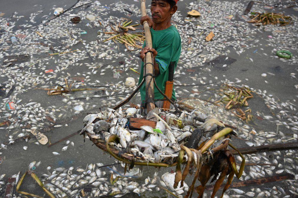 Un trabajador recoge algunos de los miles de peces muertos en Freedom Island