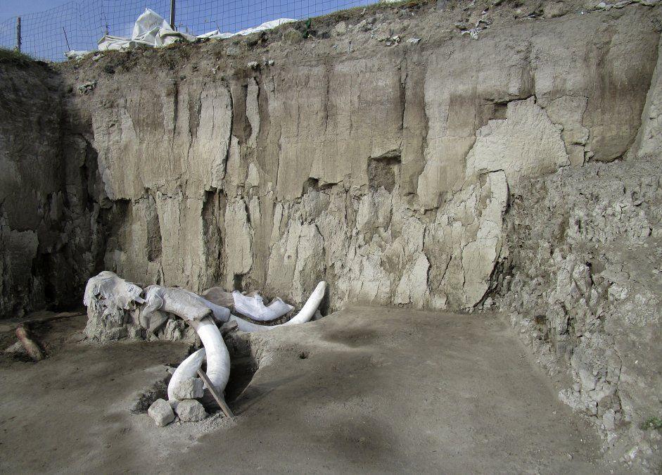 Una fotografía tomada el 6 de noviembre en el Instituto Nacional de Antropoligía de México muestra los huesos de mamut en Tultepec.