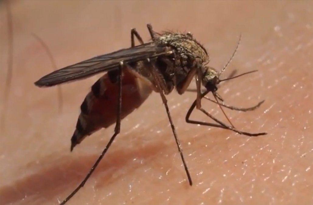 Aumentaron los casos de dengue importado; se registraron 20 en lo que va del año