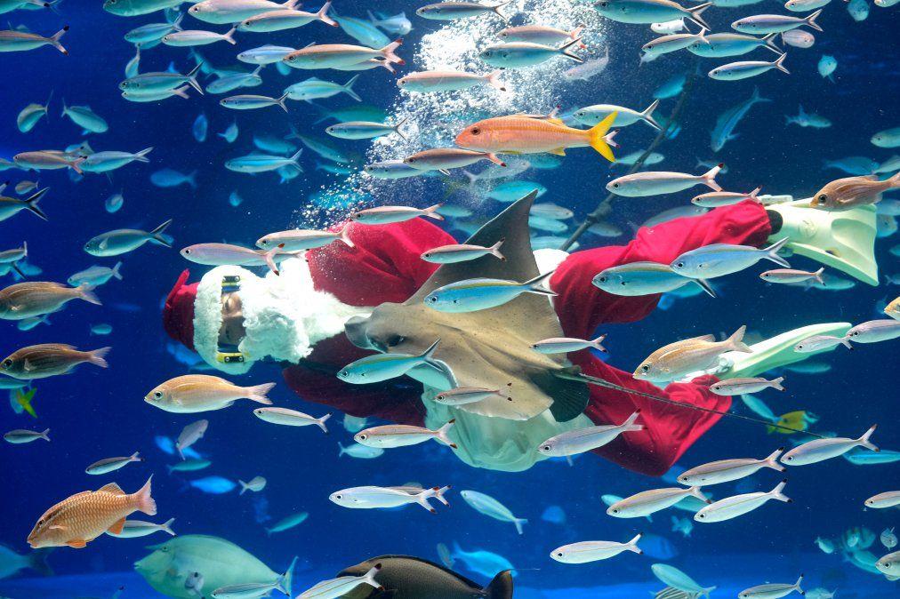 Un buceador vestido de Papá Noel nada con peses en el Acuario de Tokio durante un show navideño.