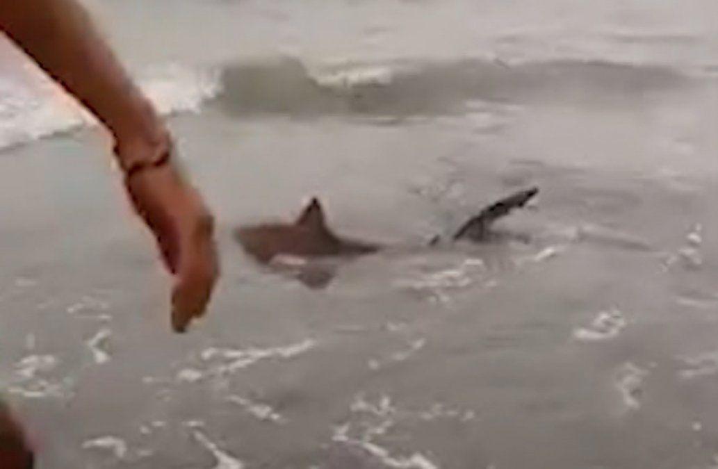 Tiburones en costa de Buenos Aires causan sorpresa y temor en turistas