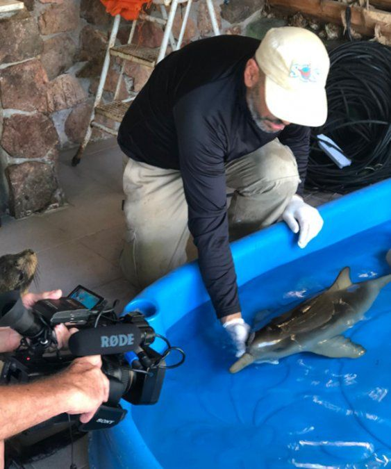 Guardavidas encontraron una cría de delfín en la playa y lo llevaron a un centro de rehabilitación
