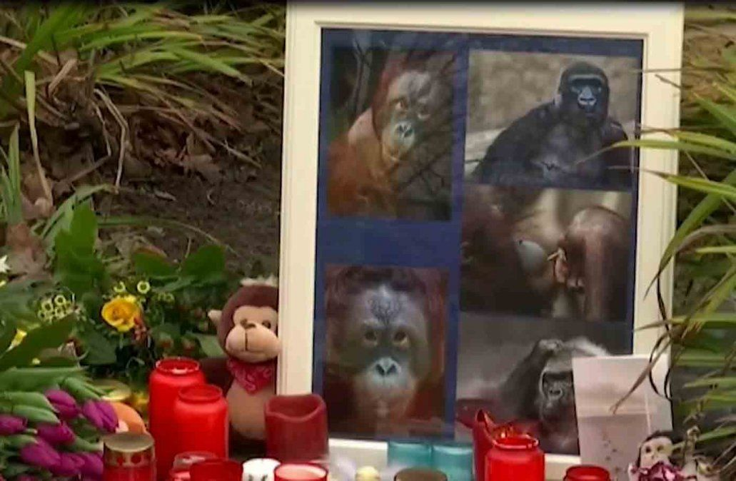 Tres mujeres se entregaron por provocar el incendio que mató a 30 monos en Alemania