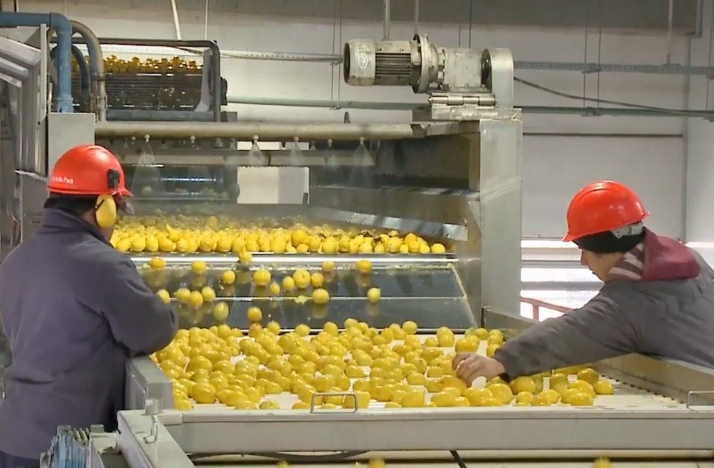 Gobierno entrante y saliente buscan una solución de fondo para el sector citrícola