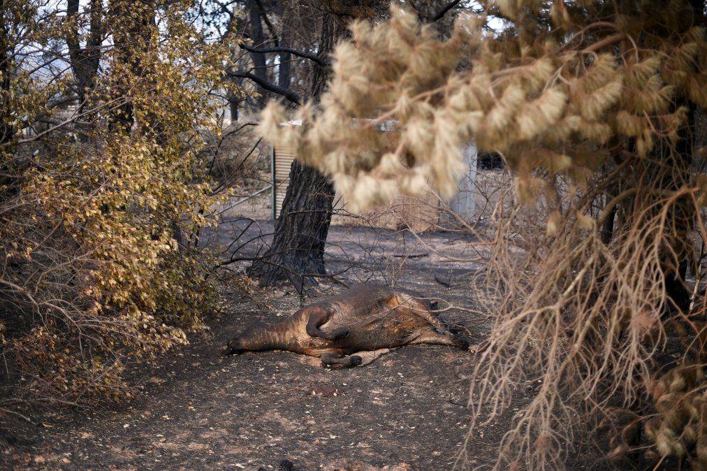 Mil millones de animales mueren por los incendios en Australia