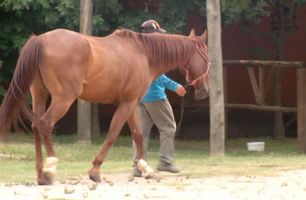 Robaron y carnearon caballos utilizados para equinoterapia en niños