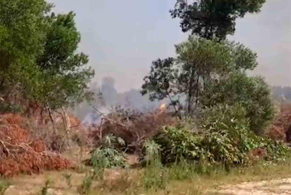 Incendio en Punta del Diablo afectó un predio donde se plantaba marihuana ilegal