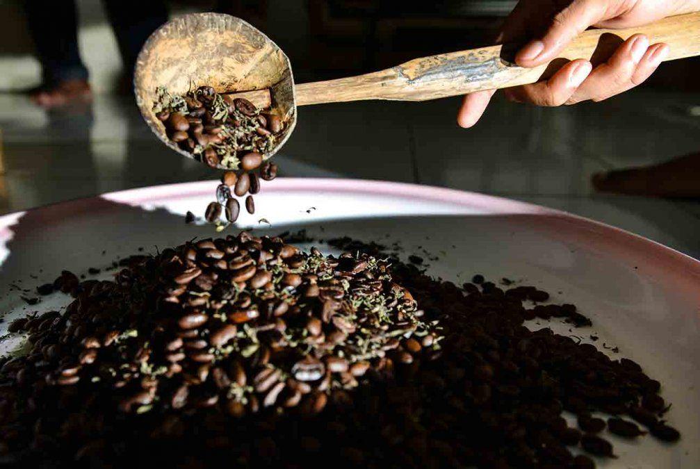 Kopi ganja, el popular café con marihuana que se toma en Indonesia y está prohibido por ley