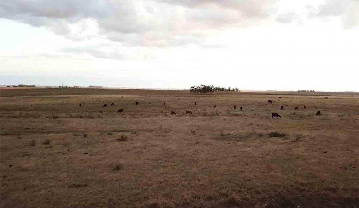 Se agudiza la sequía en Canelones y preocupa a los productores rurales