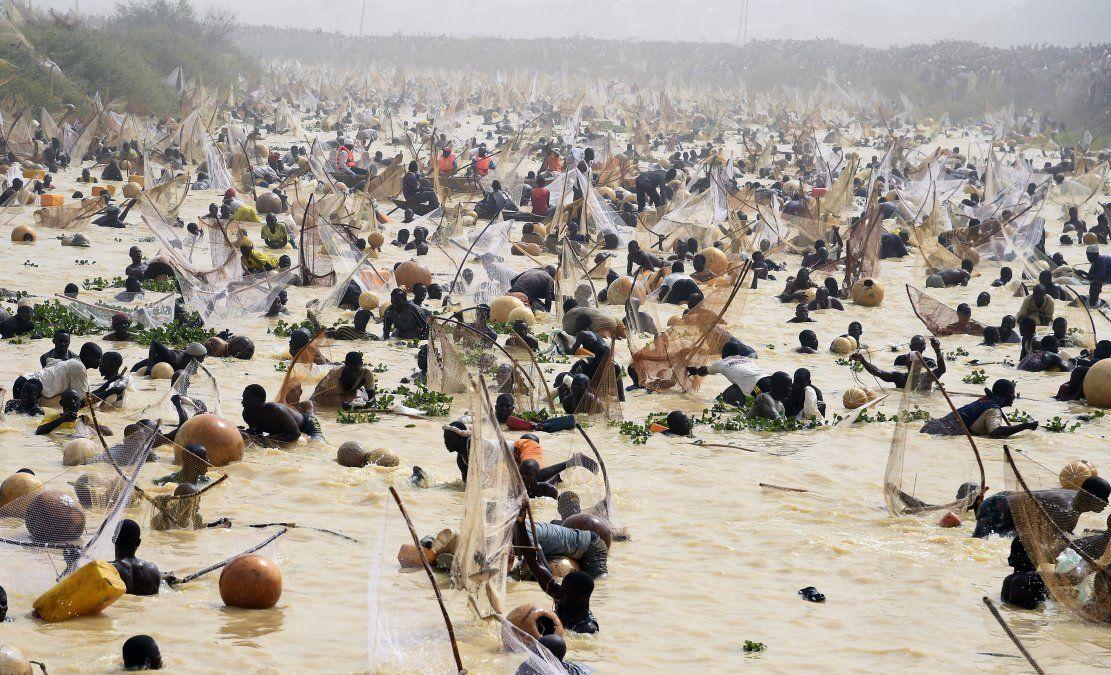 Los pescadores intentan atrapar peces durante la final del festival cultural y pesquero Argungu