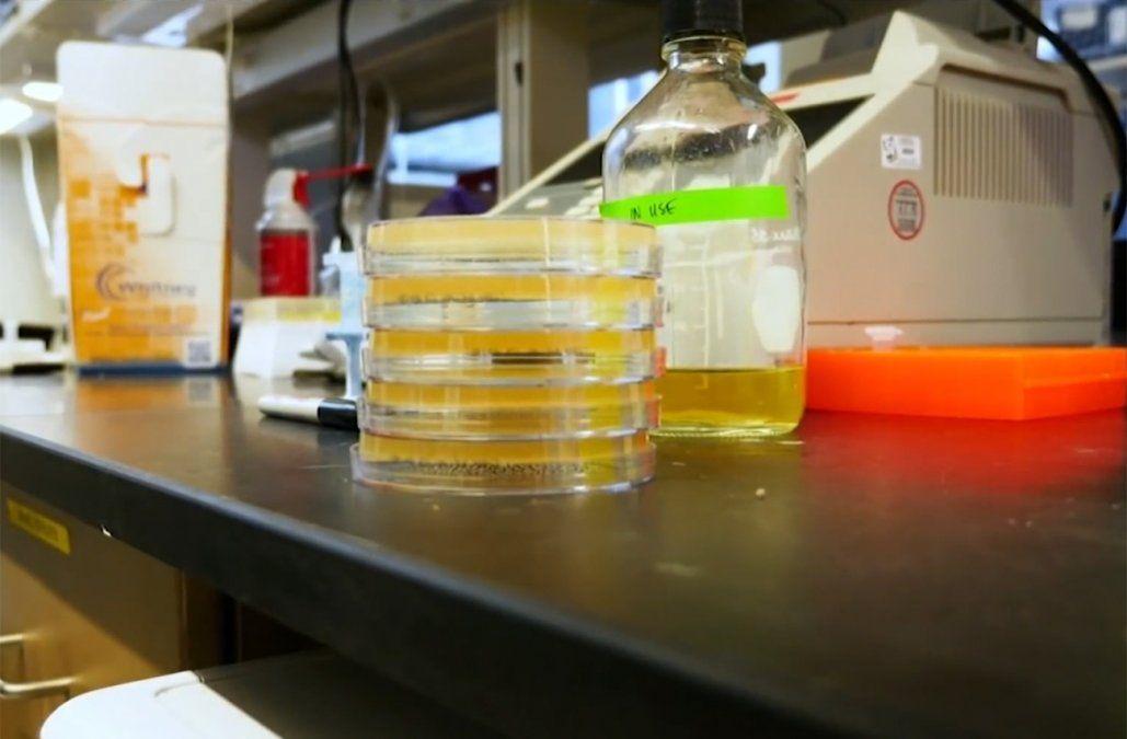 Se sumaron 12 nuevos casos de coronavirus y hay 15 pacientes en CTI
