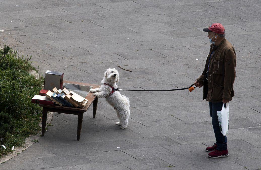 Coronavirus y las mascotas: recomiendan no sacar a los perros