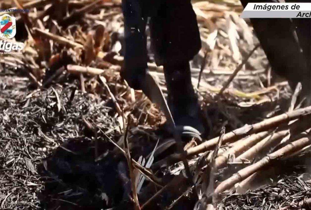 20 trabajadores brasileños de la caña no fueron hisopados ni hicieron cuarentena