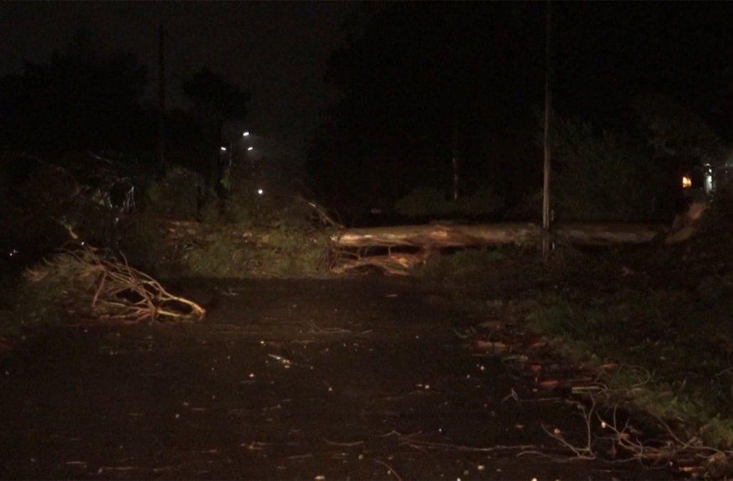 Bomberos realizó 200 intervenciones por los fuertes vientos; la mayoría por árboles caídos