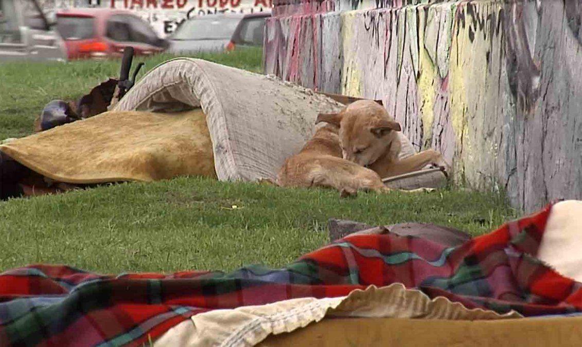 MIDES abrirá un refugio para personas en situación de calle con animales