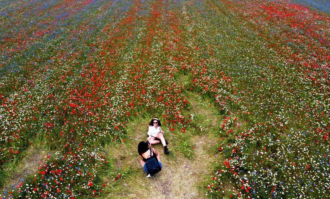 Personas tomando fotos en medio de campos de lentejas y flores de amapola cerca de Castelluccio