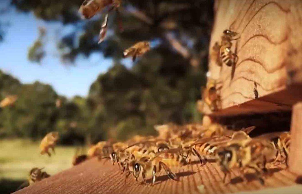 Una productora apícola usa las abejas vivas para realizar medicina alternativa