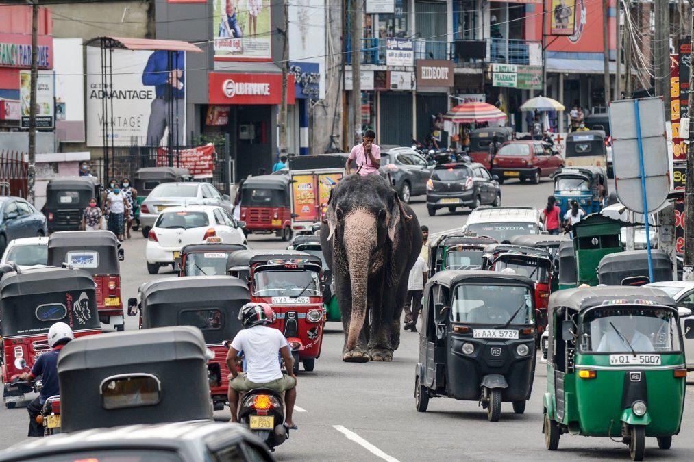Un mahout monta un elefante entre el tráfico por una calle en Piliyandala