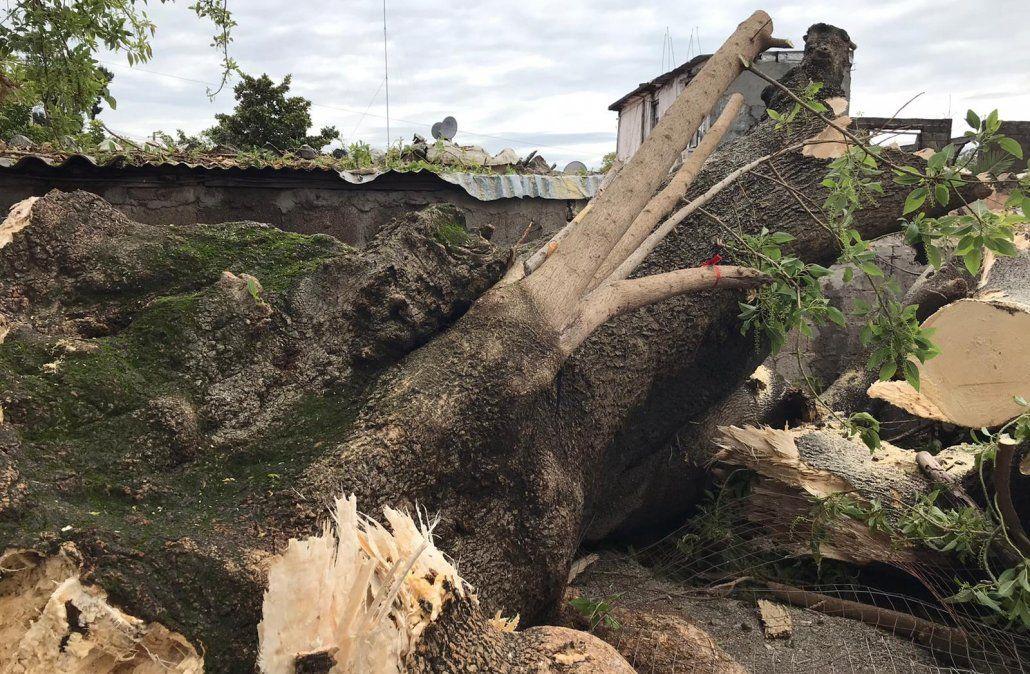 Dos jóvenes heridas al caer un ombú sobre su casa durante el temporal