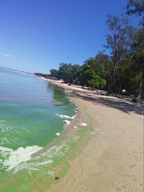 Mala noticia de cara al verano: las playas de Colonia repletas de cianobacterias