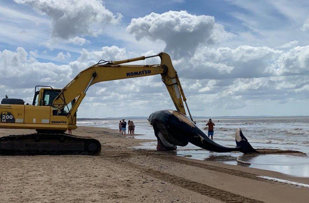 Apareció muerta una ballena de 6 metros de largo en la costa de Punta Negra