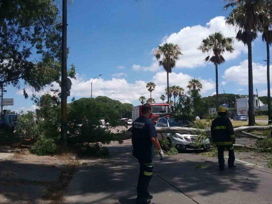 Un árbol cayó encima del capó de un auto en el que viajaba una familia