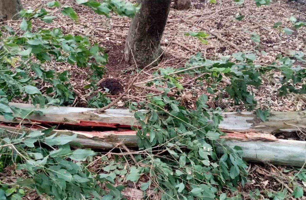 Un hombre que hacía leña en un monte murió tras recibir la descarga de un rayo