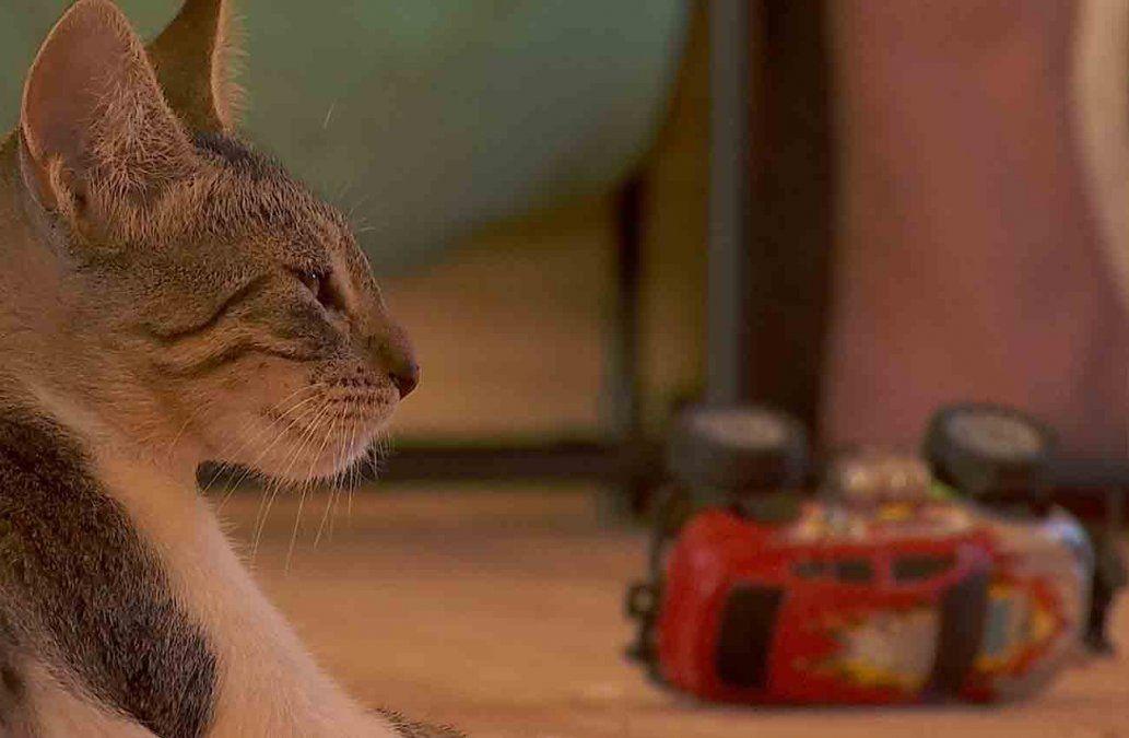 Rescatan más de 80 gatos enfermos del Mercado Modelo