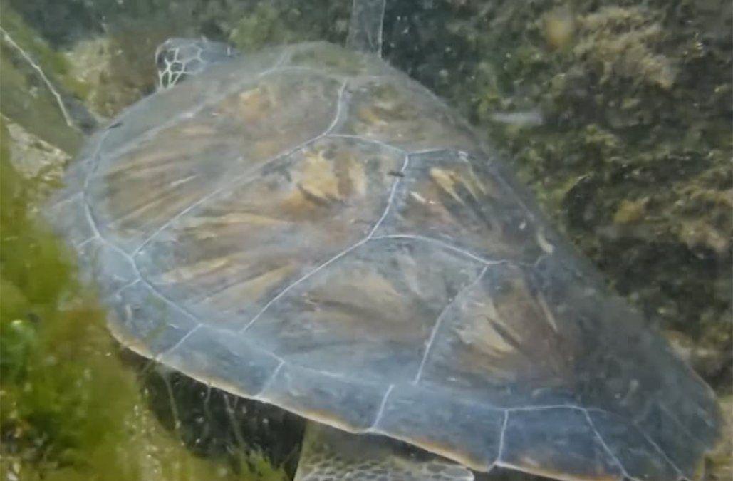 Fiscalía investiga a pescador que mató a 12 tortugas marinas con sus redes